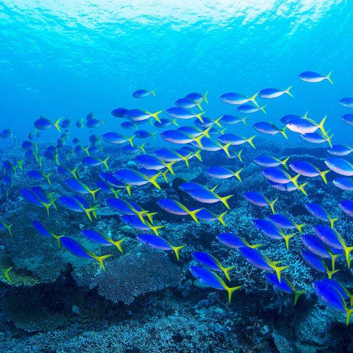 https://tahititourisme.it/wp-content/uploads/2017/08/39_Diving.jpg