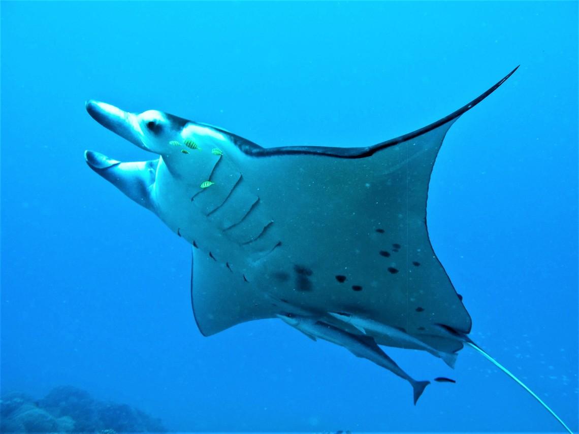 https://tahititourisme.it/wp-content/uploads/2017/08/Bora-Bora-Reef-Discovery-3.jpg