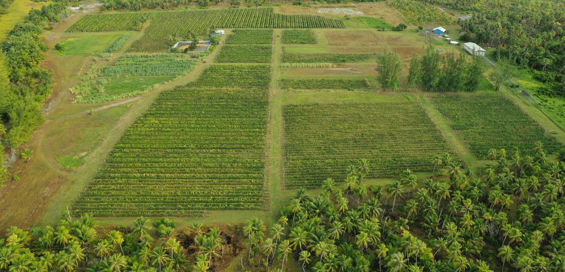 https://tahititourisme.it/wp-content/uploads/2017/08/Vin-de-Tahiti_1140x550-min.png