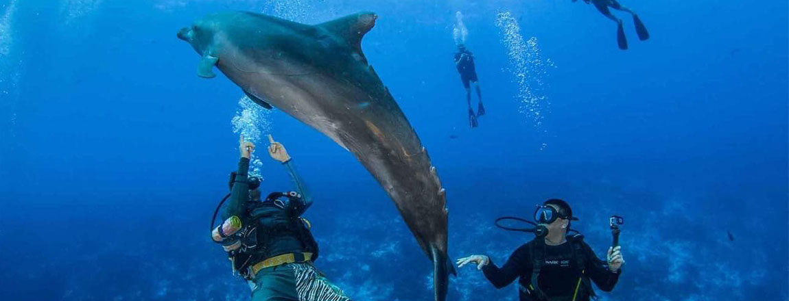 https://tahititourisme.it/wp-content/uploads/2017/10/Rangiroa-Diving-Center-1150x440px.jpg