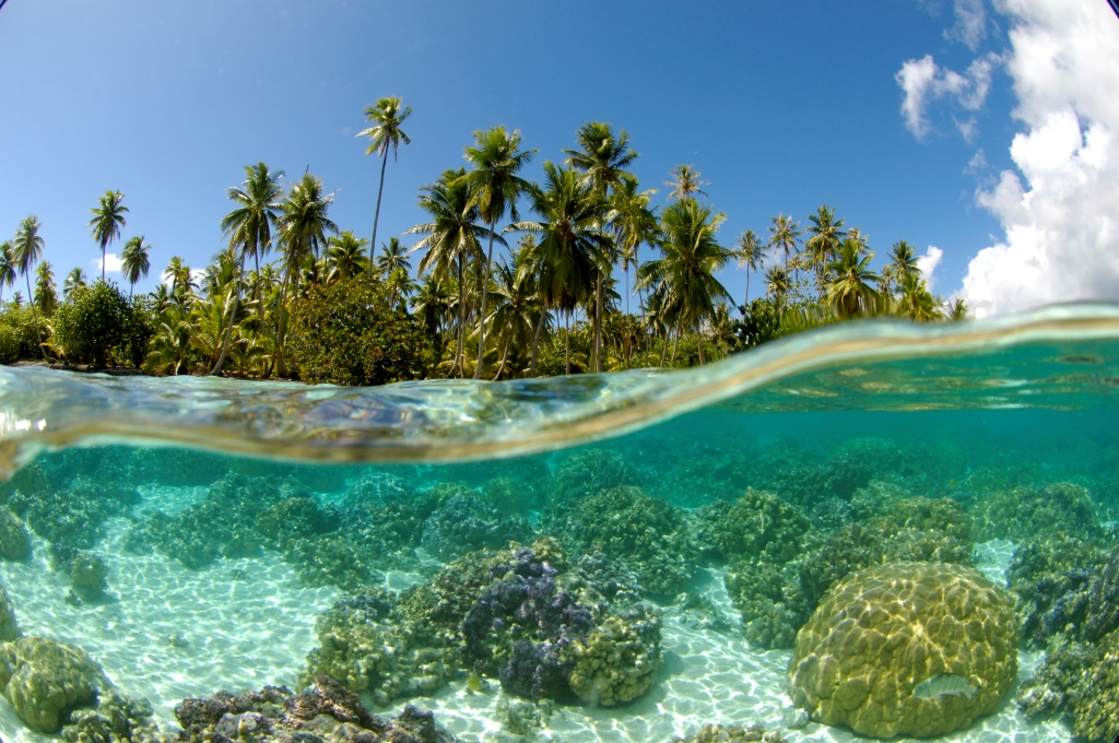 https://tahititourisme.it/wp-content/uploads/2018/03/LE-TAHAA-CORAL-GARDEN.jpg