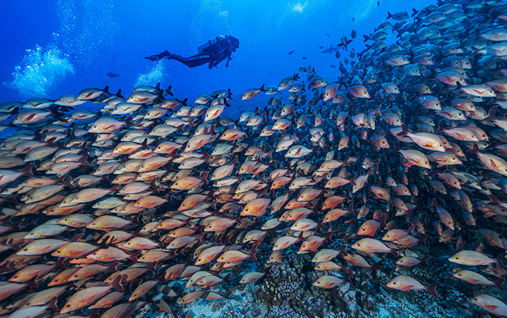 https://tahititourisme.it/wp-content/uploads/2018/10/TOPDIVE-Fakarava-diver-with-tons-of-fishes.jpg