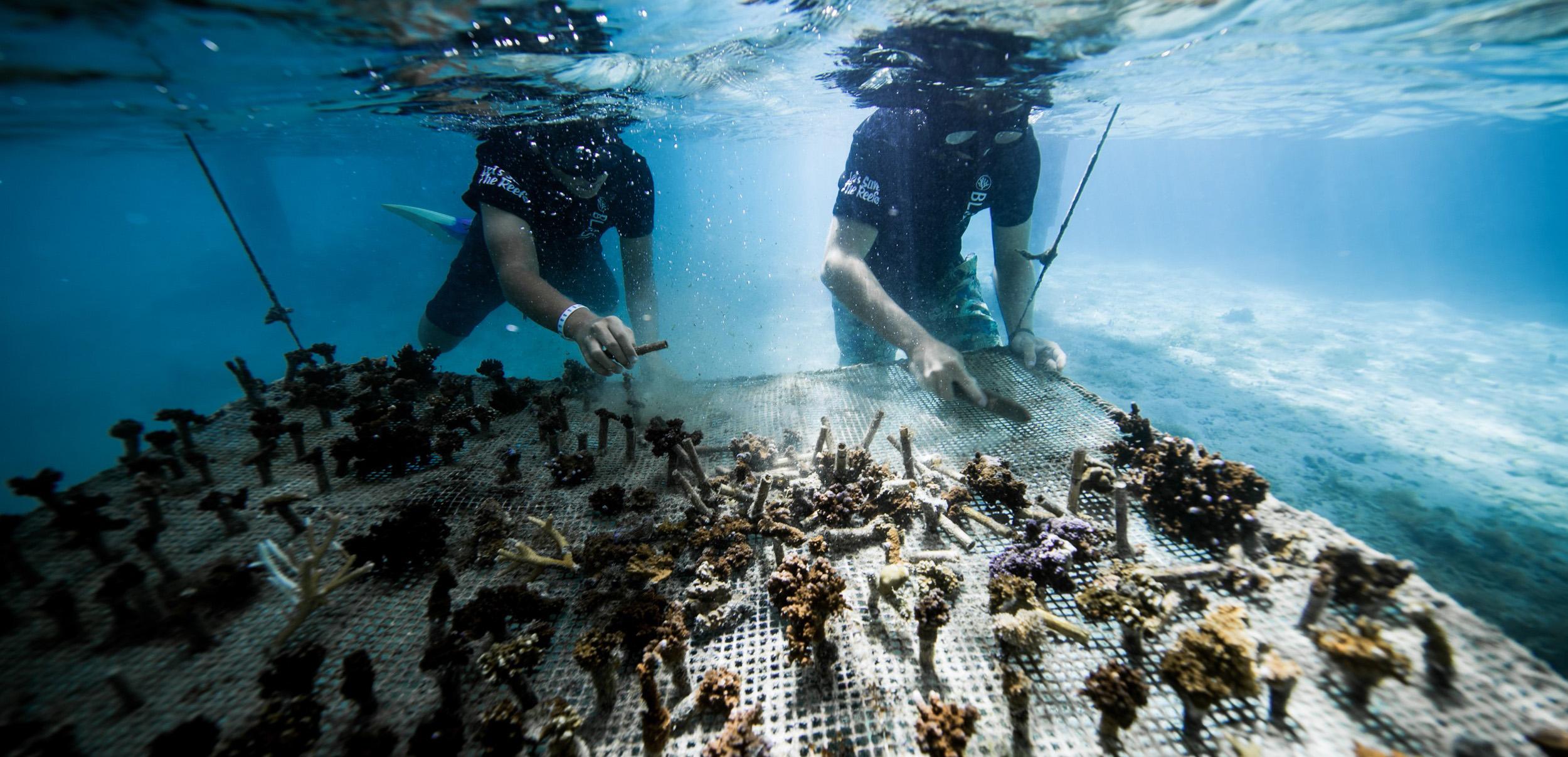 https://tahititourisme.it/wp-content/uploads/2018/11/CoralGardeners-couv.jpg