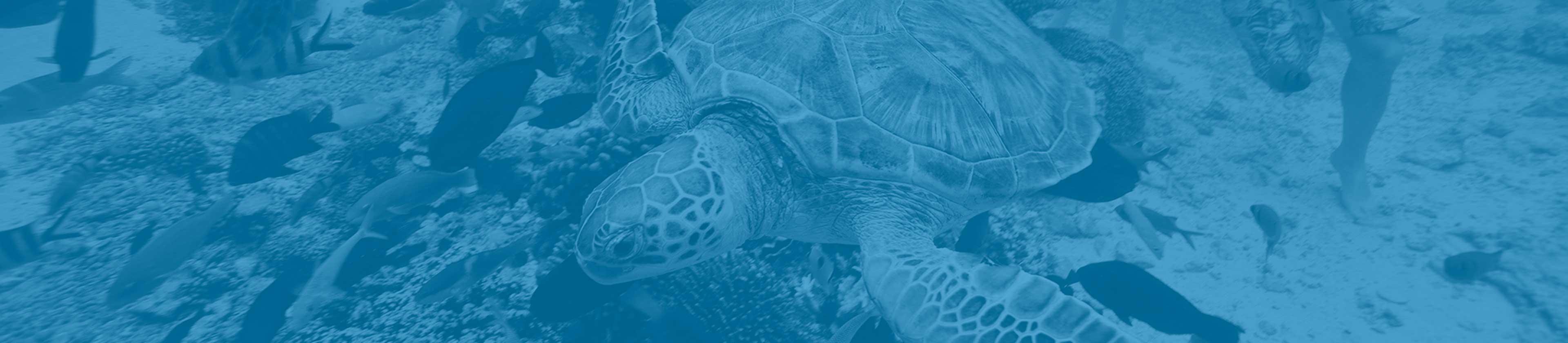 Tahiti siti di incontriCerpen ficare matchmaking parte 9