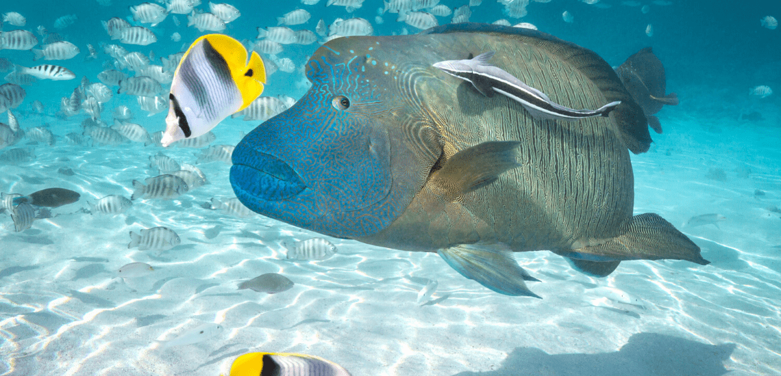 https://tahititourisme.it/wp-content/uploads/2020/02/SnorkelingExpeditions2_1140x550-min.png