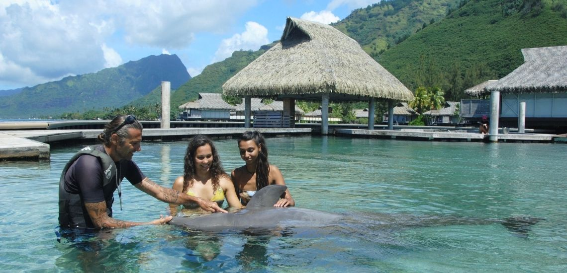 https://tahititourisme.it/wp-content/uploads/2021/01/Offre_Moorea-Dolphin-Center.jpg