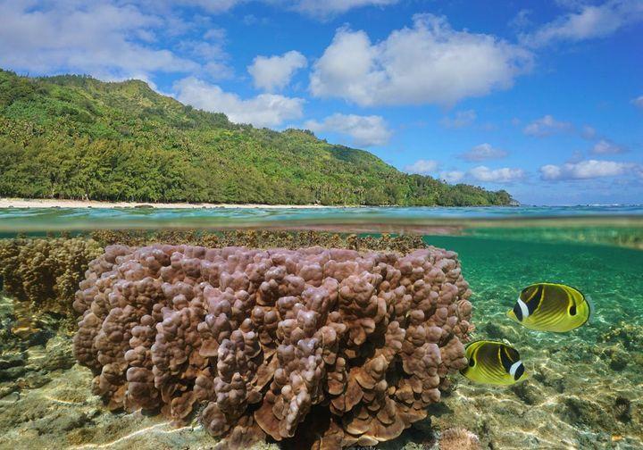 https://tahititourisme.it/wp-content/uploads/2021/09/fish-life-720w.jpg